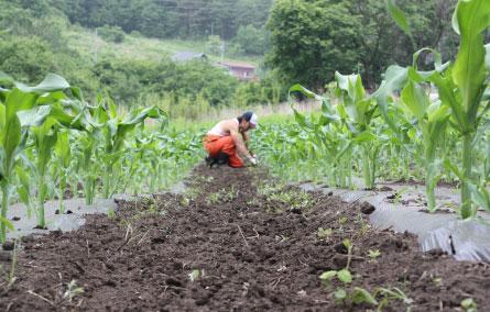 農作業する男性